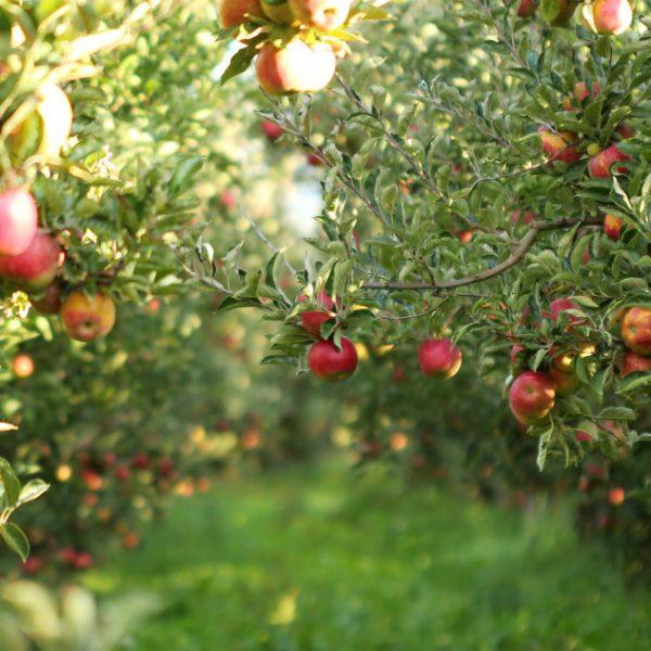 Fruitful Living